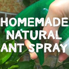 Get rid of ants for good with this easy homemade ant killer! Safe to use in a home with kids and pets - weve used this ant repellant spray recipe for years because it WORKS! Ant Killer Spray, Ant Spray, Weed Spray, Ant Killer Recipe, Homemade Ant Killer, Natural Ant Repellant, Ants In Garden, Ants In House, Get Rid Of Ants