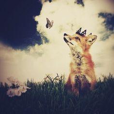 The Little Fox Prince, 8.5x11 inch Print, Fox Art, Fox Print, Woodland Fairytale Art Print. $25.00, via Etsy.