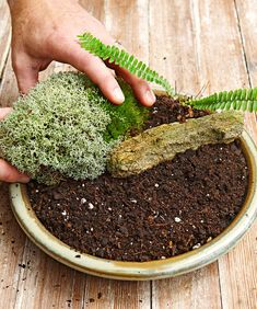 Make your own tabletop moss garden with these 5 simple steps! We even got good tips and tricks from moss expert, David Spain. Moss Terrarium, Garden Terrarium, Succulents Garden, Garden Plants, Succulent Planters, Hanging Planters, Cactus Plants, Terrarium Ideas, Air Plants