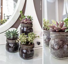 My Pink Plum! | DIY | Wnętrza | Design | Ślub i wesele | Lifestyle: Vinage'owa dekoracja z sukulentów