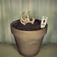 Zombie Potted Plant. Great fronch porch step decoration.