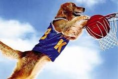 How to Train Your Dog to Play Basketball - Free Online Reading Comprehension Worksheet and Questions for Grade - on desktop, tablet and mobile phone browsers Online Reading Comprehension, Air Bud, New Netflix Movies, Basketball Plays, Basketball Tickets, Basketball Jersey, Famous Dogs, Movie Releases, How To Train Your
