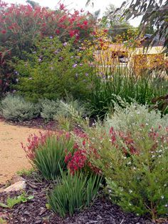 Great website for gardening with natives. With informative pdfs of gardening in Australian conditions. Great website for gardening with natives. With informative pdfs of gardening in Australian conditions. Australian Garden Design, Australian Native Garden, Australian Plants, Australian Native Flowers, Bush Garden, Dry Garden, Garden Plants, Garden Shrubs, Diy Patio