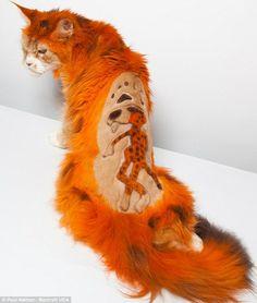Cheeto chester kitty