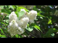 Antonio Vivaldi - Die 4 Jahreszeiten, Frühling - Four Seasons, Spring (k...