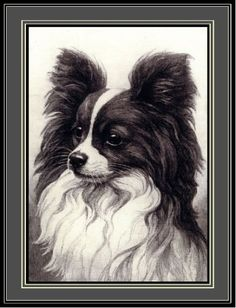 English-Picture-Print-Papillon-Puppy-Dog-Dogs-Puppies-Vintage-Poster-Art