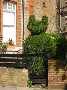 Rupert the Hedge, Highbury, London
