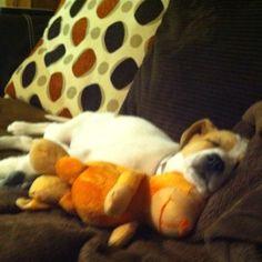 Cuddle buddies :)
