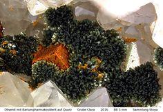 Olivenit  auf Bariumpharmakosiderit Clara Mine, Rankach valley, Oberwolfach, Wolfach, Black Forest, Baden-Württemberg, Germany Copyright © Stoya
