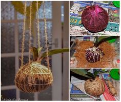 Orchid Kokedama • Ideas to Repurpose produce mesh / net bags | ecogreenlove