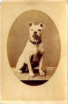 "print on a modern fabric panel /""Listening/"" Cecil Aldin 1890 Bulldog sewing"