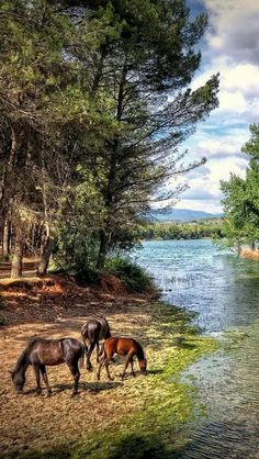 Beautiful Horse Pictures, Beautiful Horses, Nature Pictures, Animals Beautiful, Horse Photography, Landscape Photography, Nature Photography, Zelt Camping, Horse Posters