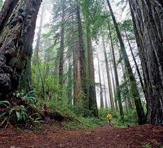Iron-Creek-Trail.jpg