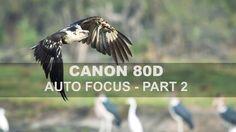 Canon - Auto Focus - Part 2 Jim Cameron, Camera Store, Canon Photography, Canon Eos, Bald Eagle, Digital Camera, Lens, Confirmation
