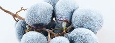 8 Great Ice Wines To Warm Your Winter Bacchus, Yummy Drinks, Wines, Warm