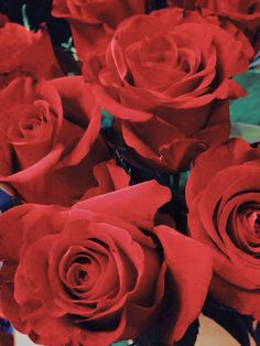 red roses | Tumblr