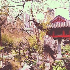 Chinese Garden of Darling Harbour, Sydney. Australia
