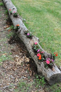 : Re-Purposed Tree Log Planter