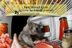 Buster's Vision - Be A Mindful Pet Owner & Research Pet Food Nutrition