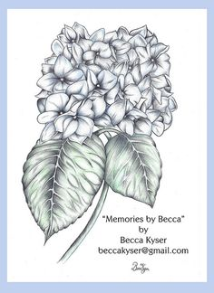beautiful drawing, must grow more hydrangeas