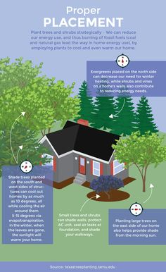 Gardening for Climate Change: Learn About Strategic Planting to Save Energy - Ideen finanzieren Backyard Trees, Landscaping Trees, Front Yard Landscaping, Acreage Landscaping, Privacy Landscaping, Arborvitae Landscaping, Colorado Landscaping, Landscaping Blocks, Landscape Plans