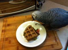 As popular as waffles are with people, why not make them for parrots? By simply substituting a few ingredients and adding healthy toppings o...