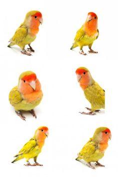 Mooie review. Parrot, Bird, Animals, Parrot Bird, Animales, Animaux, Birds, Animal, Animais