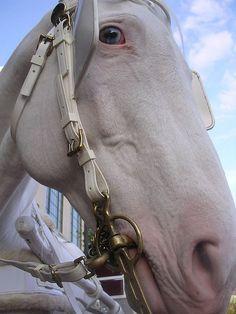 White horse, looks like Bella