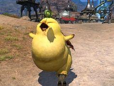 Chocobo - Final Fantasy XIV: A Realm Reborn Wiki Guide - IGN