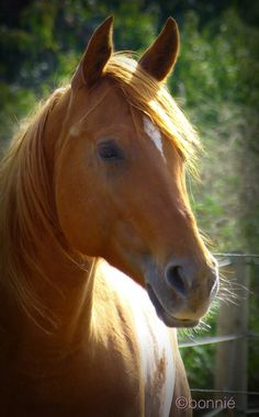 Equine Photography - Horse