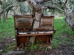 USSR abandoned places in decay - A tree growing through an abandoned piano. This is sad. Whi would abandon such a beautiful piano.n now look how the poor tree has to grow! Abandoned Mansions, Abandoned Buildings, Abandoned Places, Derelict Places, Top Photos, Photos Du, Vieux Pianos, Old Pianos, Haunted Places