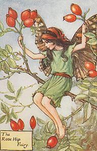 Rose Hip Fairy  Artist: Cicely Mary Barker