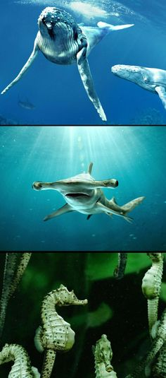 1Stack - Underwater Life