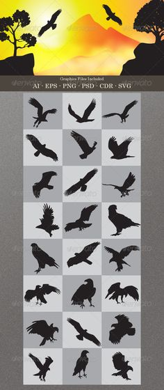 Eagle Silhouettes - Animals Characters
