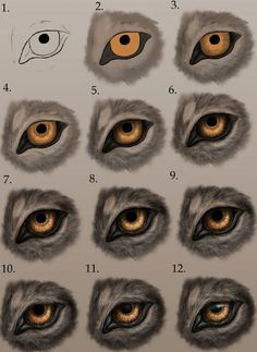 Animal Sketches, Animal Drawings, Art Sketches, Furry Drawing, Cat Drawing, Wolf Sketch, Wolf Eyes, Eye Art, Drawing Techniques