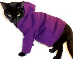 Cat Hoodie Cat Clothes Knit Cat Hoodie Several Colors Available pet clothing cat clothing pet clothes Cat Shirt Cat Clothes handmade Sphynx, Crazy Cat Lady, Crazy Cats, Pet Clothes, Cat Clothing, Animal Clothes, Knitted Cat, Cat Sweaters, Cat Shirts