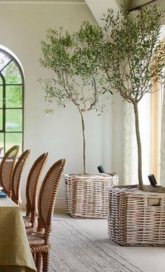 olive trees in dining room