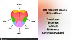 Simple one minute video on human tongue recognising various taste Human Tongue, 5 Tastes, Science Topics, Different Recipes, Simple