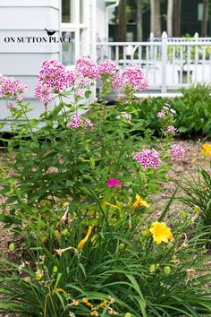 Phlox Perrenial: Hardy Plants | The DIY Gardener's Guide Part 2 | On Sutton Place