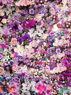 Purple Poetic Flowers