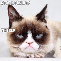 GOOD MORNING? WHERE? http://cheezburger.com/9037694720/grumpy-cat-good-morning-meme