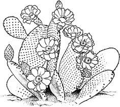 opuntia prickly pear cactus coloring page partygames pinterest prickly pear cactus cacti and embroidery