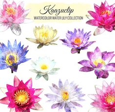 Watercolor Water LilyCollection  Commercial and by kaazuclip