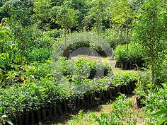 This is a tree nursery in Tiruvannamalai Tamil Nadu South India. They are growing trees resident to arid conditions to reforest Arunachala mountain. Outdoor Nursery, South India, Growing Tree, Permaculture, Mountain, Trees, Stock Photos, Image, Tree Structure
