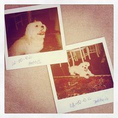 Boris #dog #dogs #cao #cão #cachorro #pero