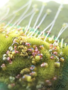 Moss Garden teabag art detail by Velvet Moth Studio