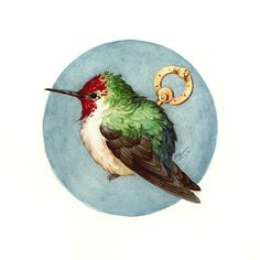 hummingbird bird illustration art. This is so cute!