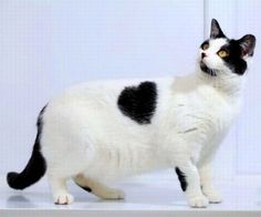 Black Hearted Kitty Cat - Click for More...