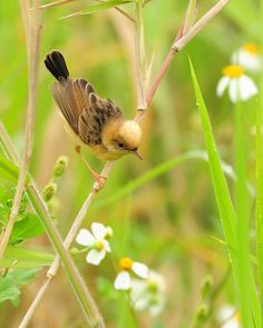 Meadow fairies - III by Mirror_Lake, via Flickr