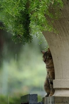Cats in Hong Kong in a rainy day.